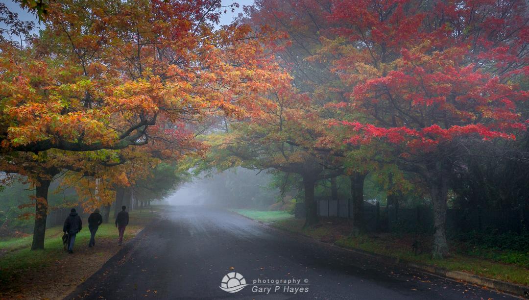 Blackheath Autumn Stroll