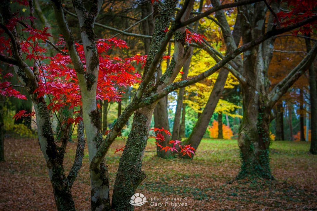 Late Mt Wilson Autumn