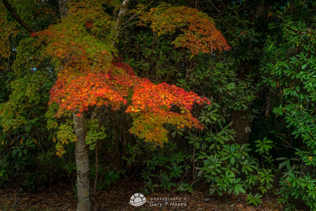 Mount Wilson Muted Autumn