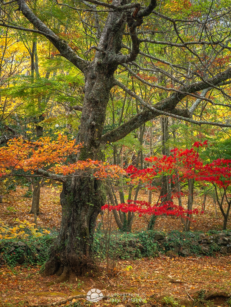 The Red and Orange of Autumn