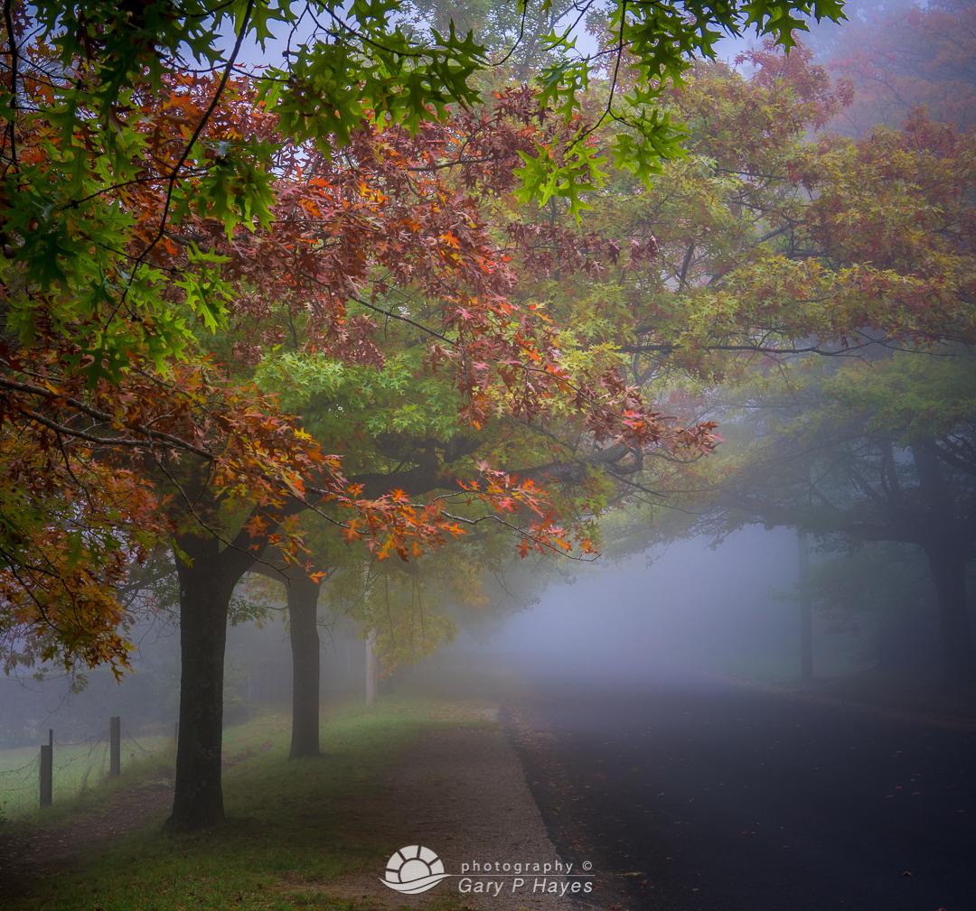 Autumn Blackheath Mist Morning