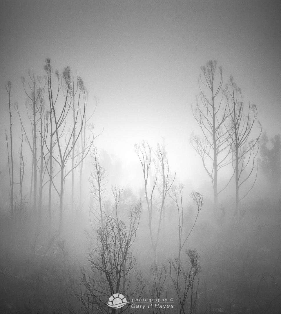 Katoomba Escarpment Trio_