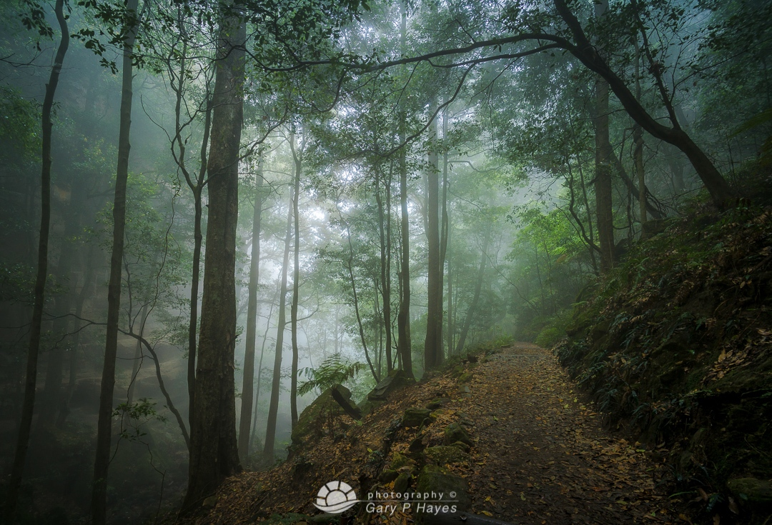 Katoomba Mist Trail