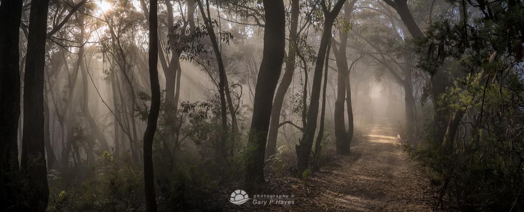 Little ZigZag Misty Trail