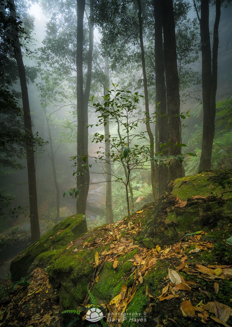 Mist Trail Katoomba