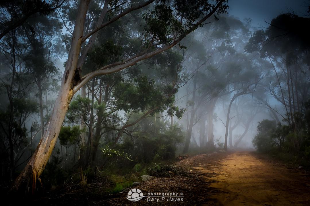 Mitchells Autumn Trail