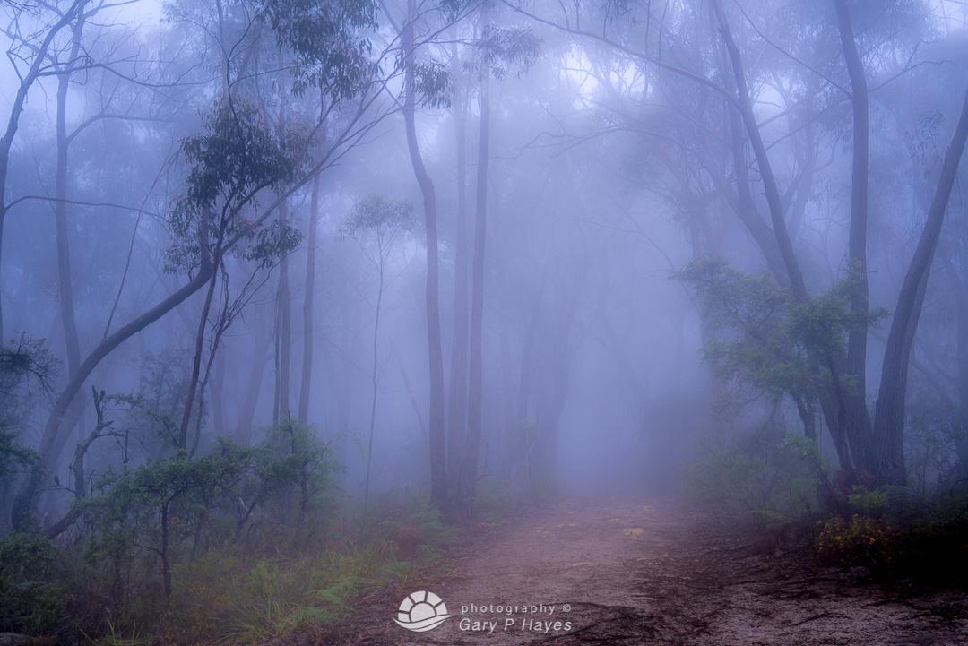 Mount Victoria Mist Trail