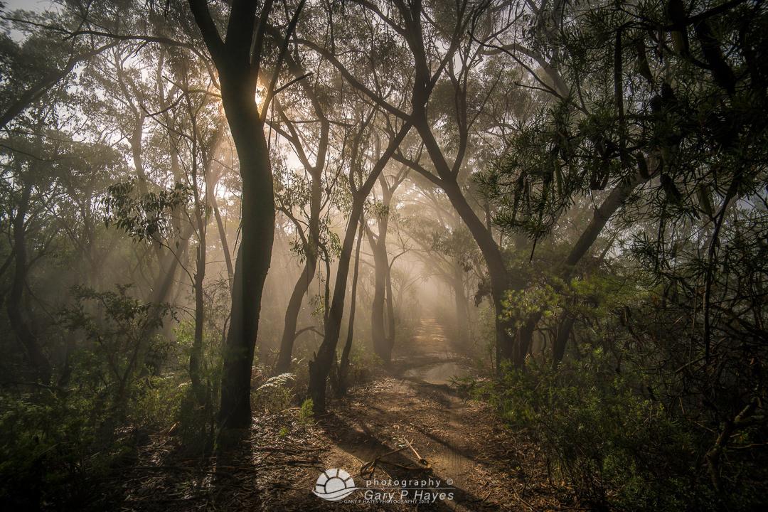 Mt Victoria Trail