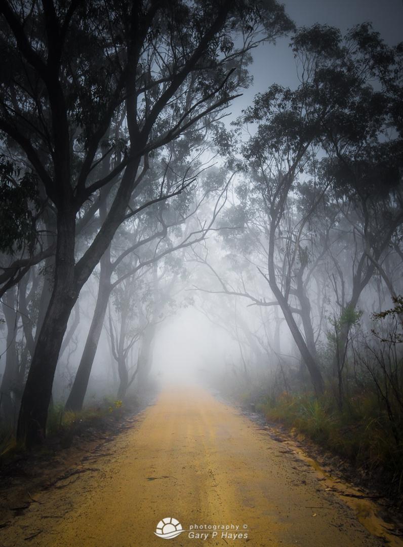 Victoria Falls Misty Trail