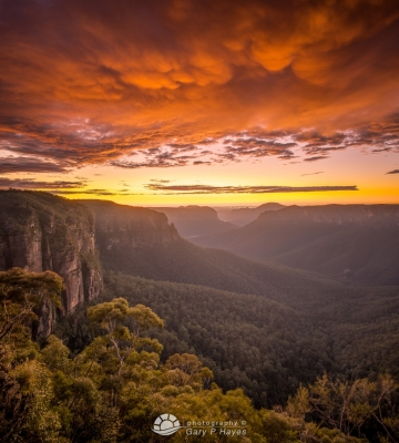 Grose Valley Dawn XV