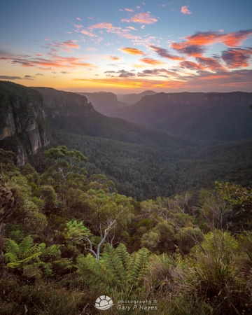 Grose Valley Dawn XXIV