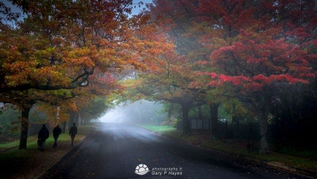 Blackheath Misty Autumn-2