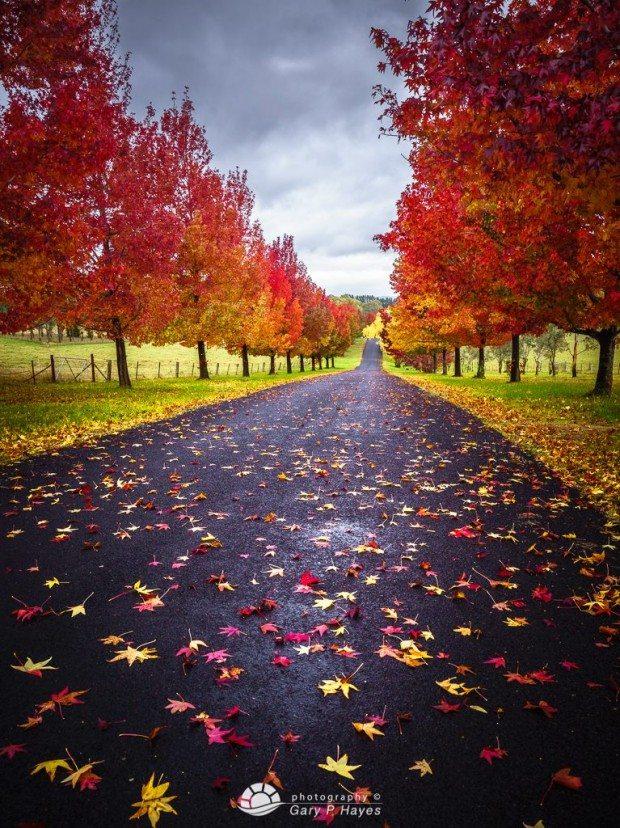 Hartley Autumn 2015