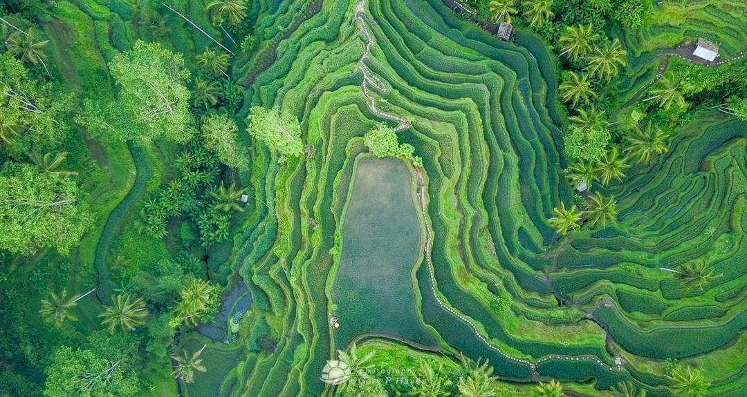 Bali-Aerials-1280px-104-2