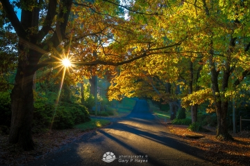 Blackheath Autumn Sunburst 1080px