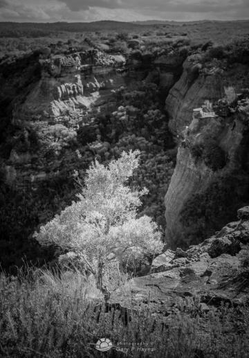 Butterbox-Bright-Tree