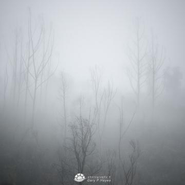 Reids-Trees