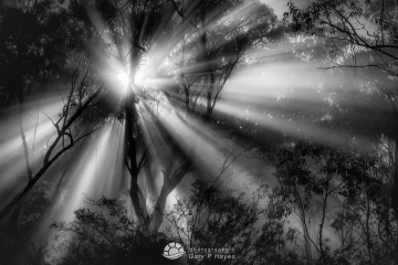Ancient Rays, Mt Victoria