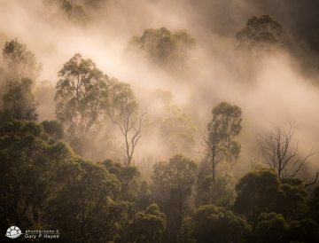 Ghosts-of-the-Blue-Gum