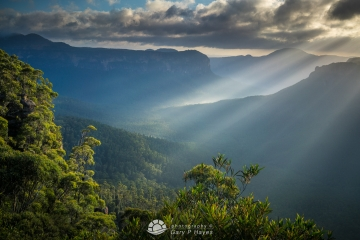 Grose Valley Rays