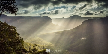 Grose-Pulpit-Rays-I