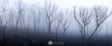 Lithgow-Bell-Fire-Ghosts