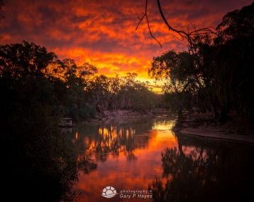 Murrumbidgee River Red
