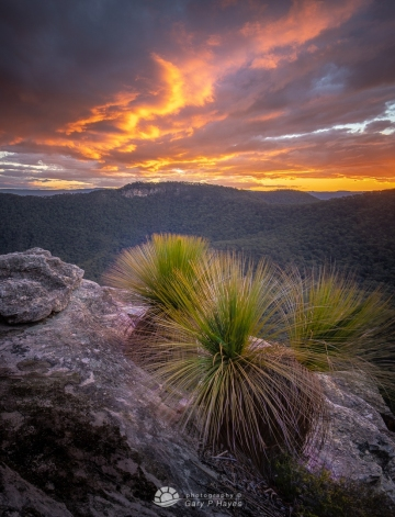 Sunset Rocks Grass Tree_
