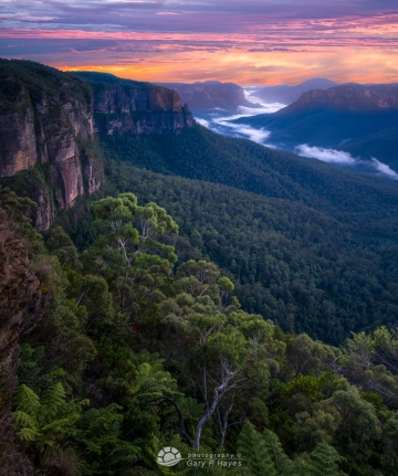Grose Valley Dawn XX