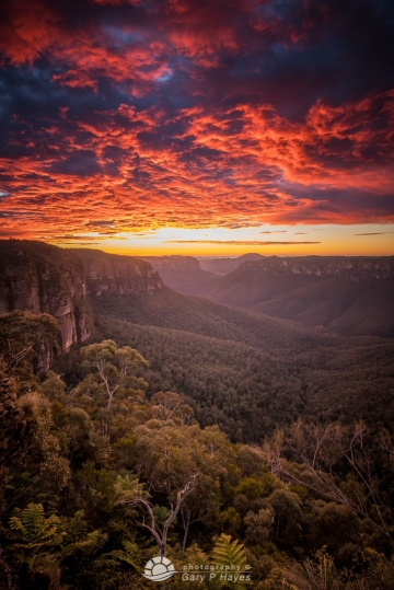 Grose Valley Dawn XXII