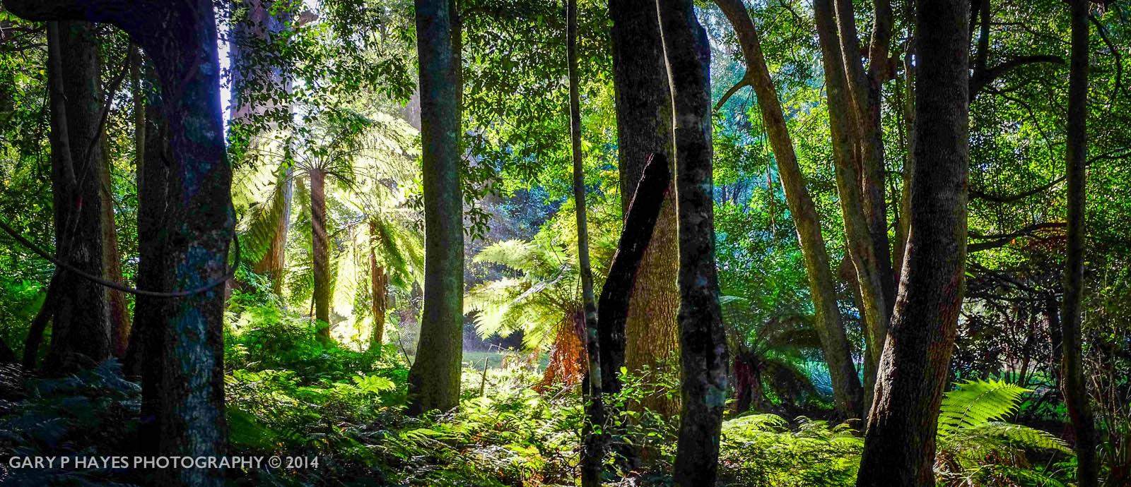 Mount Tomah Botanical Gardens – Grade 1