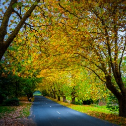 The Colour of Autumn III