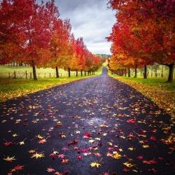 The Colour of Autumn II