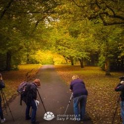 The Colour of Autumn I